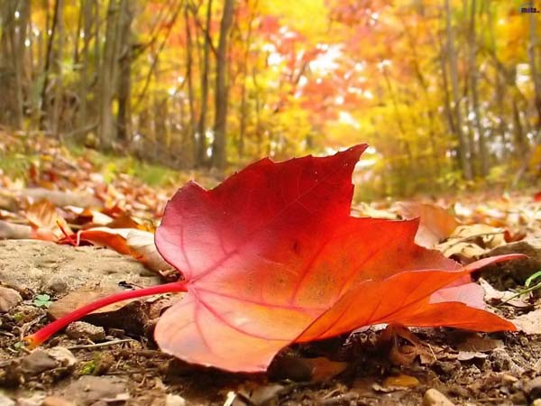 2011.10_Travel_Autumn_falling_leaf_600x450.jpg